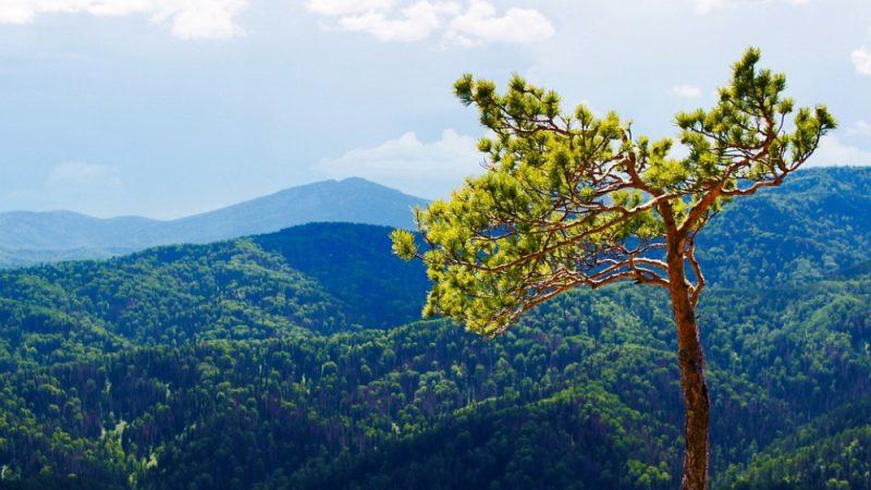 В Алтайском крае создан Координационный совет по развитию туризма при Губернаторе
