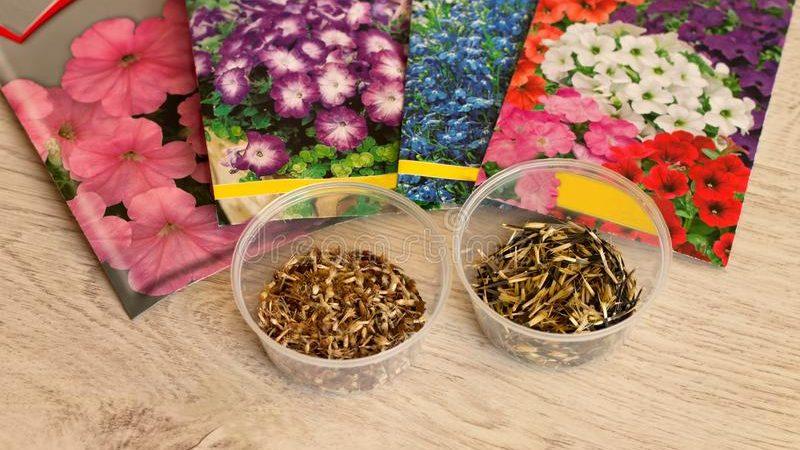 Об особенностях подтверждения качества семян цветов